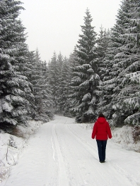 Woman taking relaxing walk in winter forest