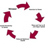 Information about Stress:  Breaking the Stress Cycle Naturally
